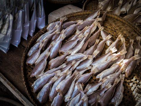 ปลาสลิดบางบ่อขายส่ง